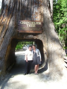 10-06-06 Drive Thru Tree, Redwood Forest, CA - 16