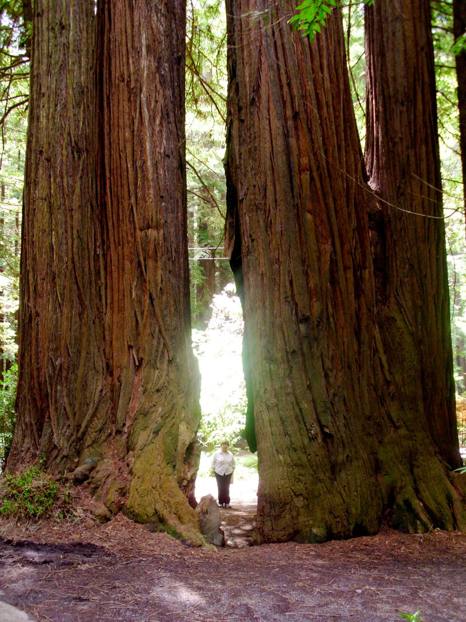 TBP 0007: The Redwood Forest's Sacred Peace and Beauty ...